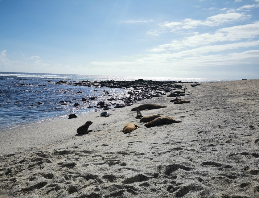 galapagos-on-a-budget-the-ultimate-guide