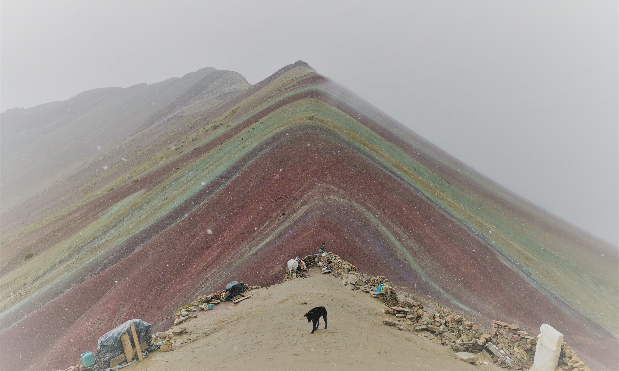 Colorful mountain top and dog